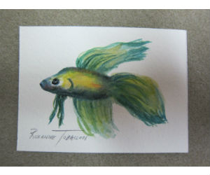 Siamese Fighting Fish in Watercolor