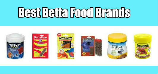Best Betta Food Brands