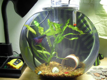 Betta bowl heater in 2.5 gallon tank