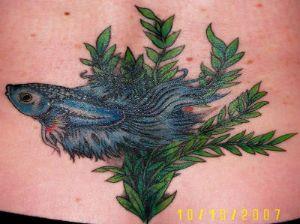 Betta Fish Tattoo 4