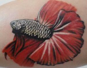 Betta Fish Tattoo 5