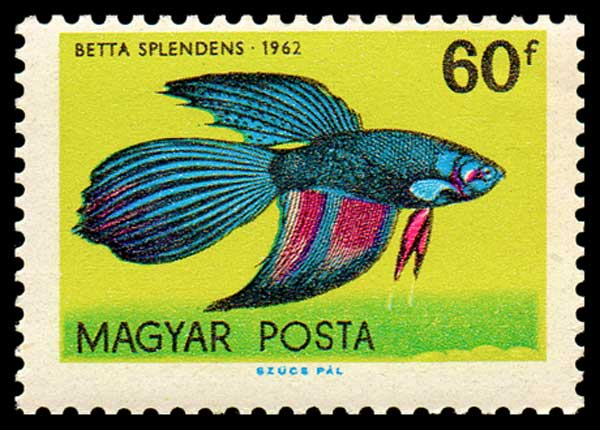Stamps of Siamese Fighting Fish