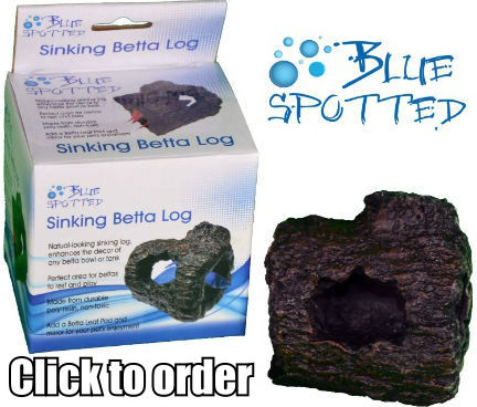 The Blue Spotted Betta Sinking Log