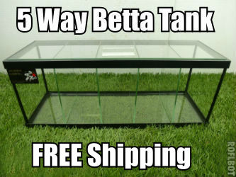 5 way Betta fish tank with dividers