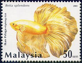 Stamps of Betta splendens