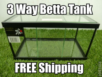 3 way Betta fish tank with dividers